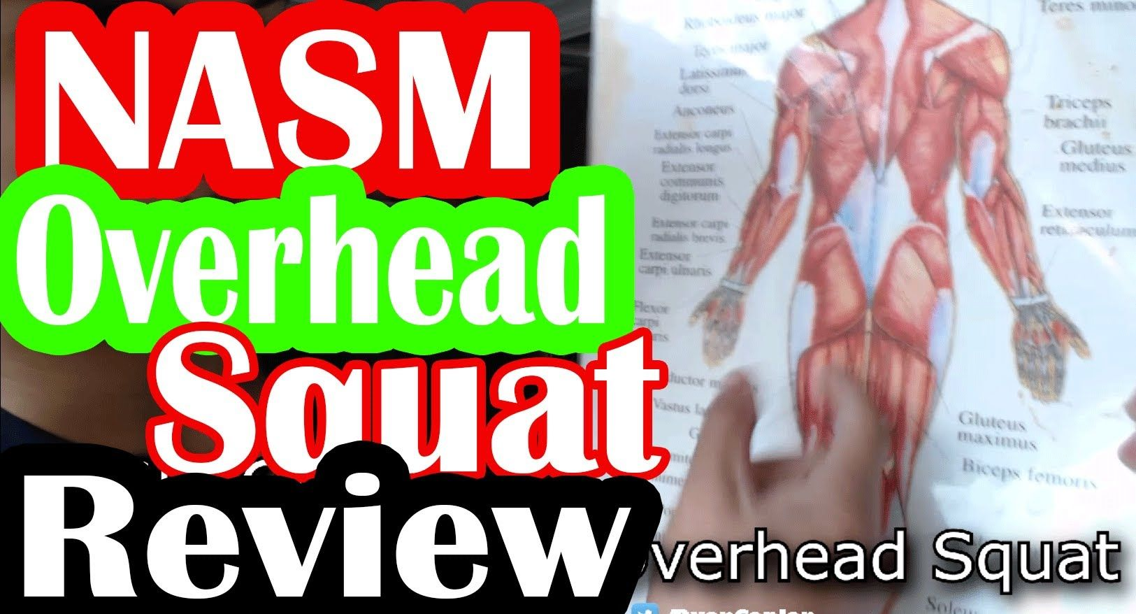 Nasm Oversquat Review Study Guide By Ryan Nasm Pinterest