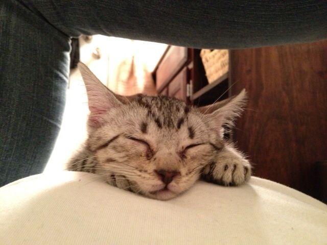 I'm a little sleepy!