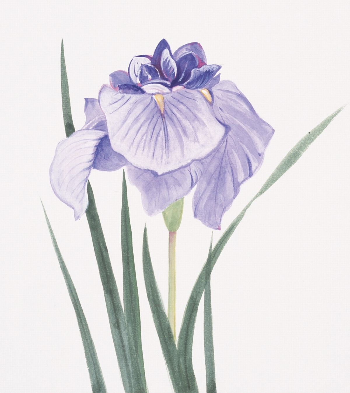 Purple iris iris tatoos pinterest flower tattoos iris and flower purple iris izmirmasajfo
