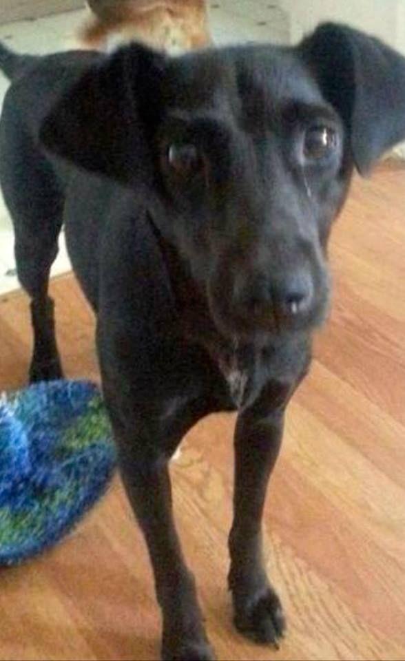 Trudee Jaeger R Newington Please Share My Dog Kali Cal Lee