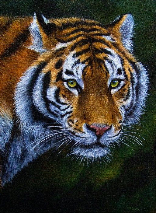 AMAZING tiger portrait by Jason Morgan...how beautiful.
