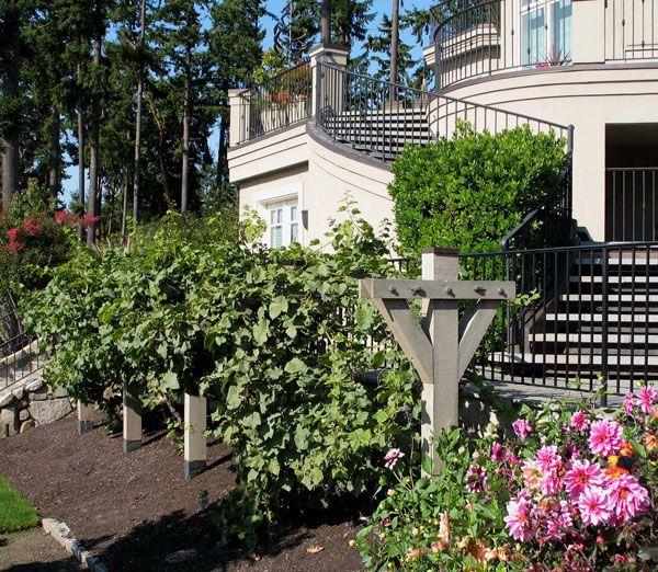 Http://www.kemperiversenltd.com/images/misc/grape-trellis