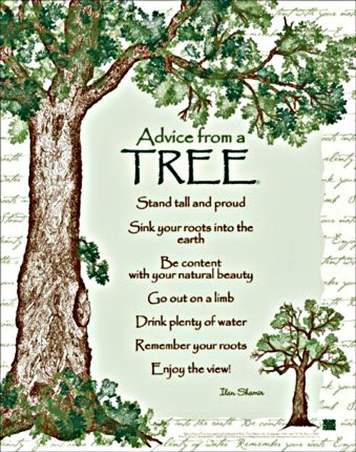 Advice from a tree Nature quotes, Advice quotes