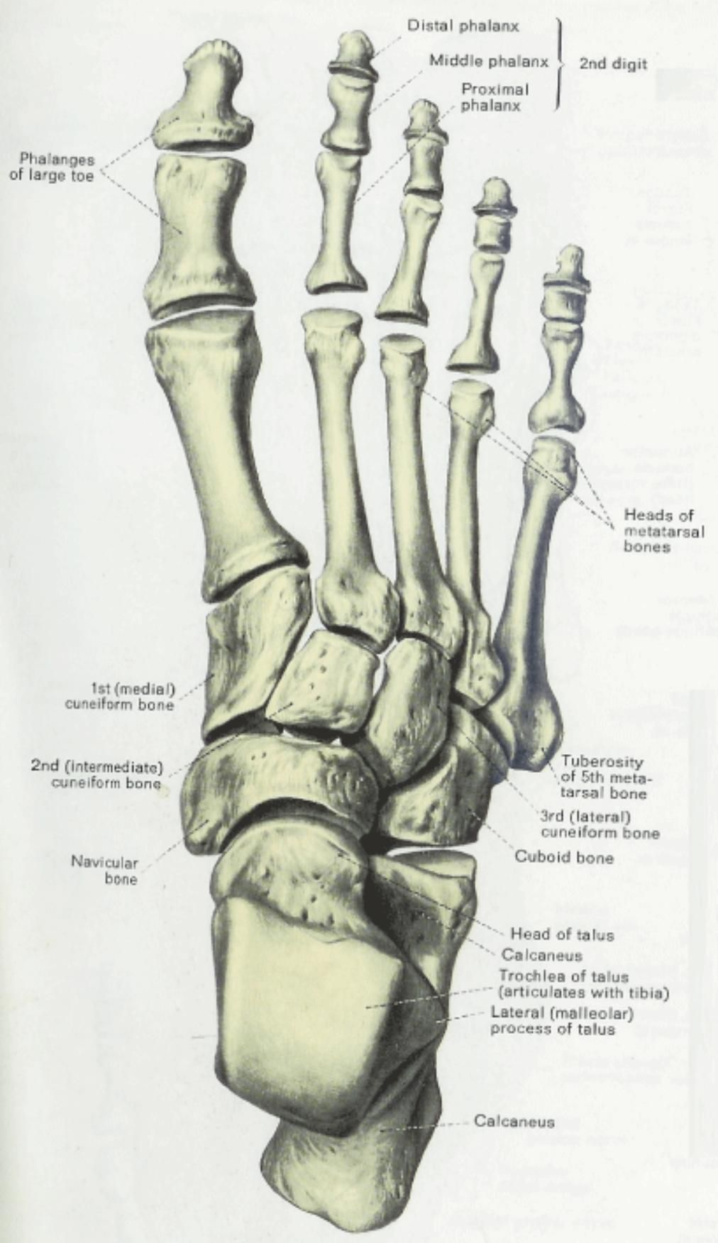 hight resolution of anatomy physiology illustration