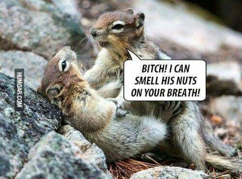4e841c4af0c9b46a5ad1f46359f65f8e bitch! i can still smell his nuts on your breath!\