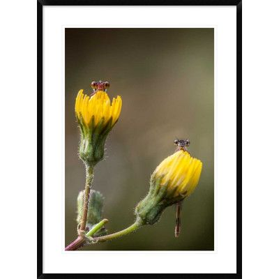 Global Gallery 'This Time You Can't Shoot US!' by Ghizzi Panizza Alberto Framed Photographic Print Size: