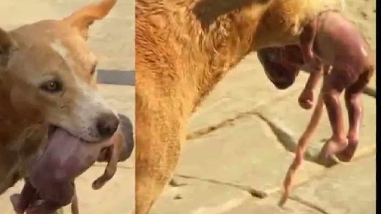 dog finds an abandoned baby foetus and takes it to safety baby u0027s