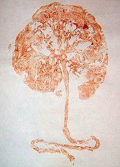 Tree of life. Placenta print.