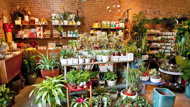 The best flower shops in NYC (มีรูปภาพ)