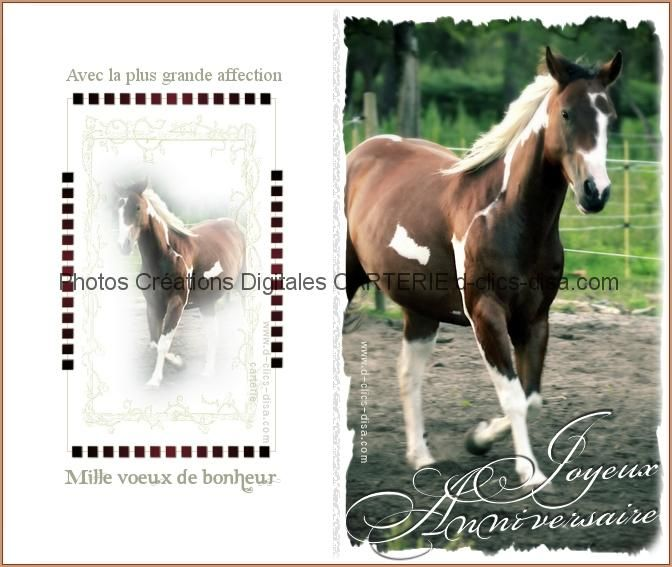 Carte anniversaire a imprimer photo cheval dclicsdisa cartes pinterest carte anniversaire - Photo animaux a imprimer ...