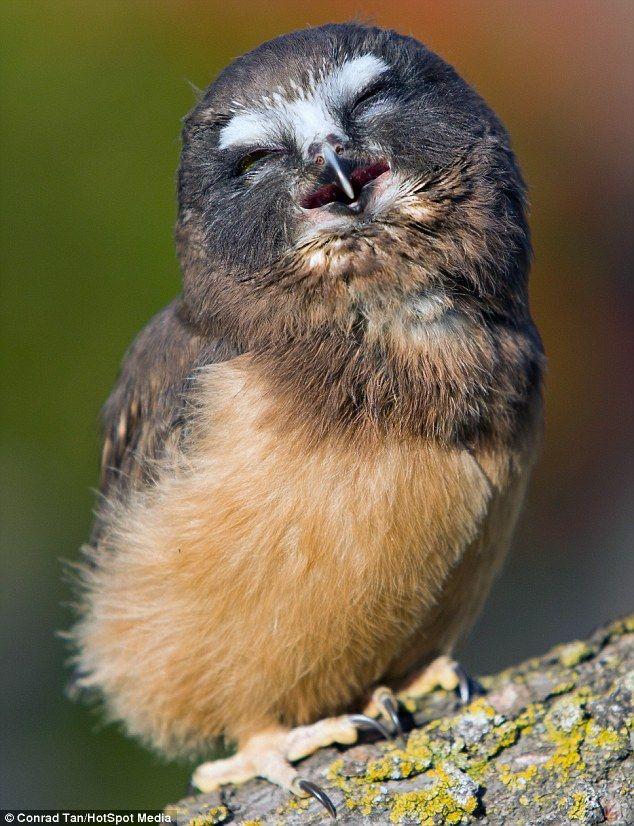 Care to share the joke #owl?