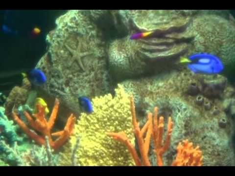 sea life aquarium mall of america, MN | Mall of america ...