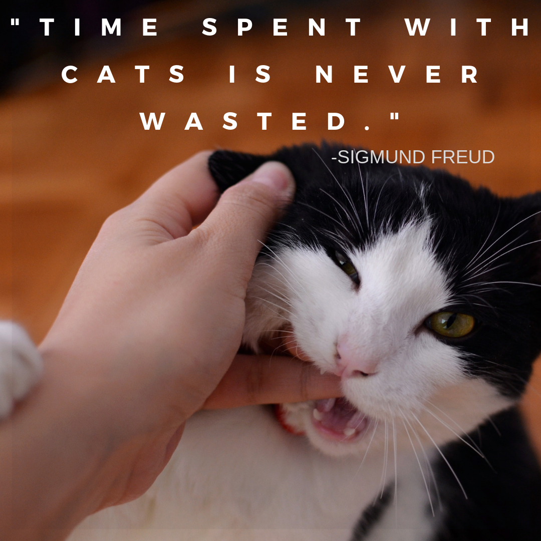 Time Spent With Cats Is Never Wasted Sigmund Freud Cat Love Pet Happy Animal Happiness Fun Quotes Funny Cats Cat Quotes Funny Cats