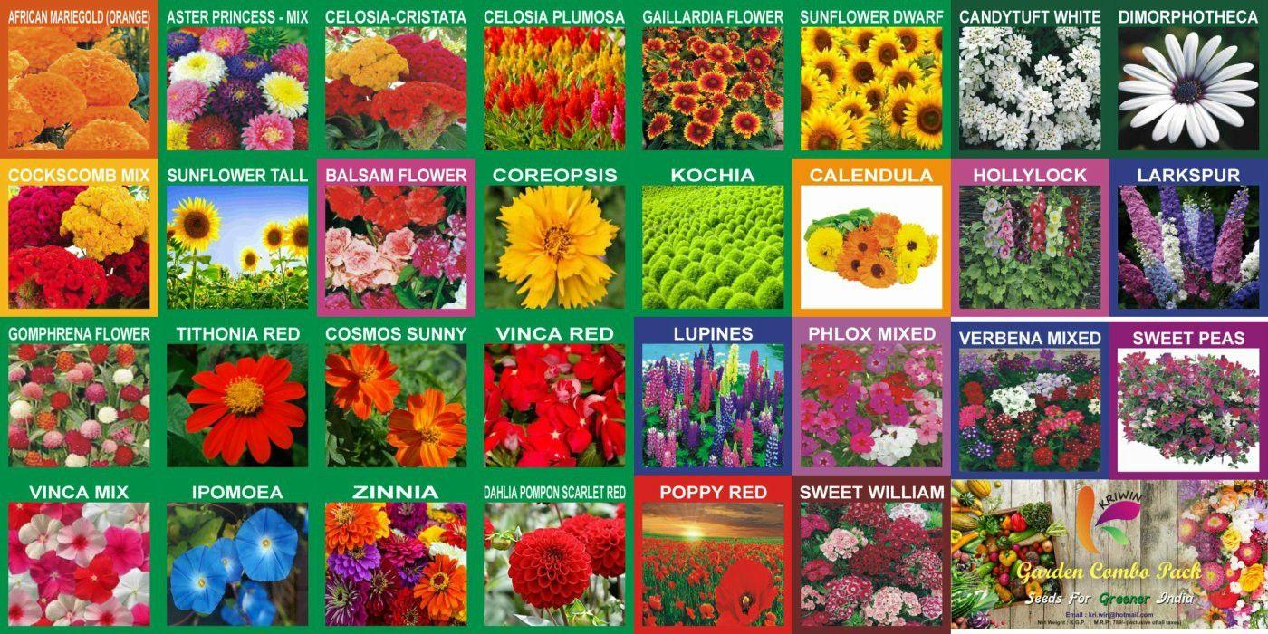 Flower Seeds Combo In 2020 Flower Seeds Garden Guide Flowers