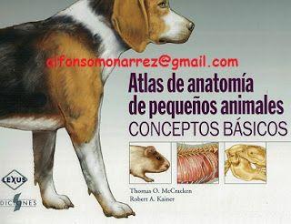 Atlas De Anatomia Veterinaria Pdf