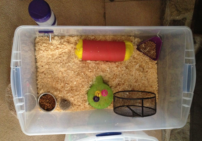 Cage Setups Exclusive Hedgehogs Erizos Erizos Bebes Mascotas