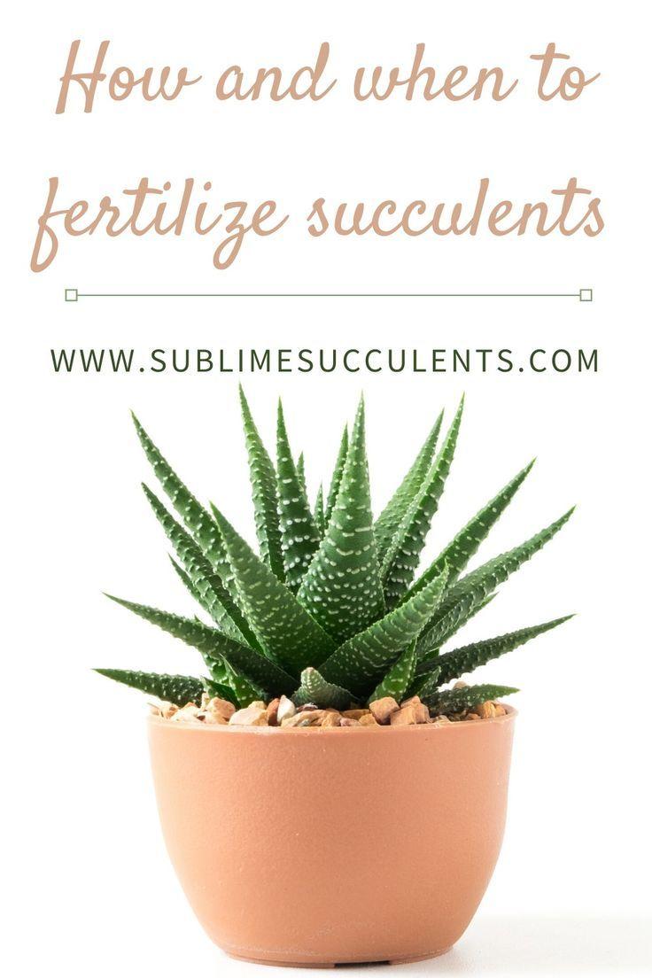 How And When To Fertilize Succulents Succulent Fertilizer
