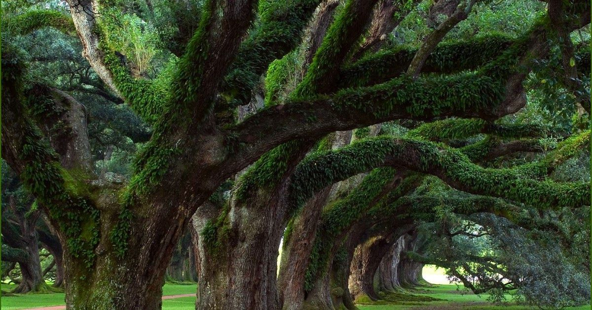 Pemandangan Indah Buat Foto Pemandangan Alam Leniuchu 10 Tempat Wisata Alam Jogja Sajikan Pemandangan Indah Yang Bikin Di 2020 Pemandangan Gambar Bergerak Gambar