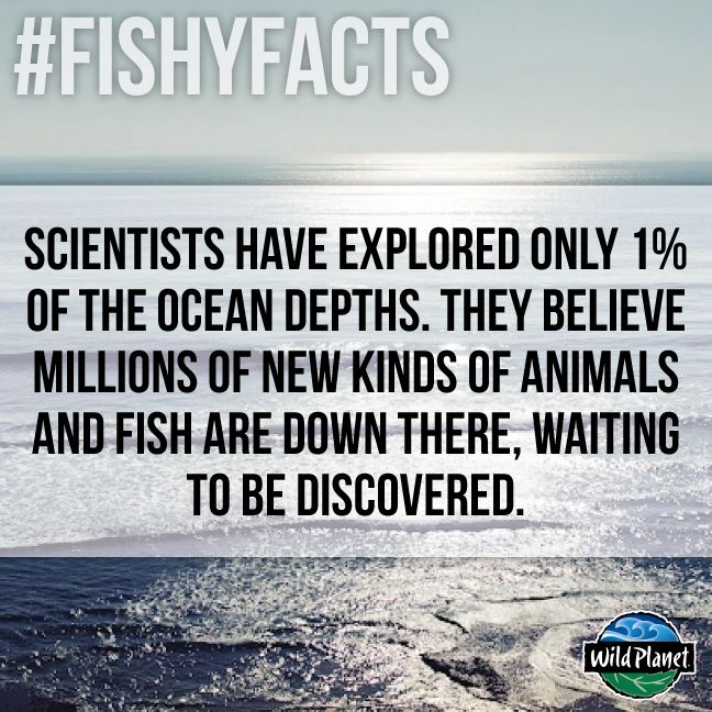 Fun fact fish oceans fishy facts pinterest ocean for Facts about fishing