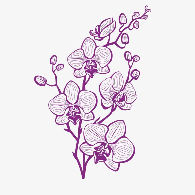 Hand Painted Purple Orchid Vector Plant Hand Painted Plants