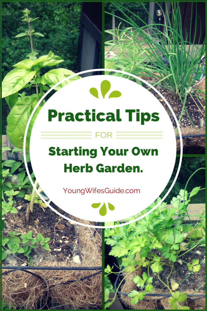 Practical Tips for Starting Your Own Herb Garden Small