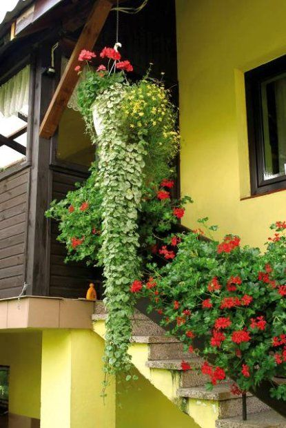 Zdjecie Nr 1 W Galerii Plants Flowers Balcony