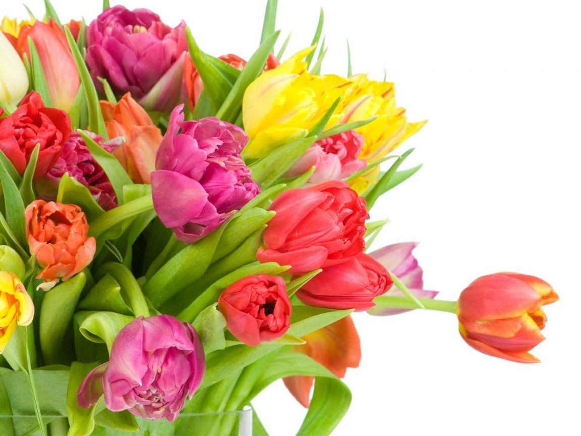 Download Wallpaper 1152x864 Tulips, Flowers, Bouquet, Bright, White ...