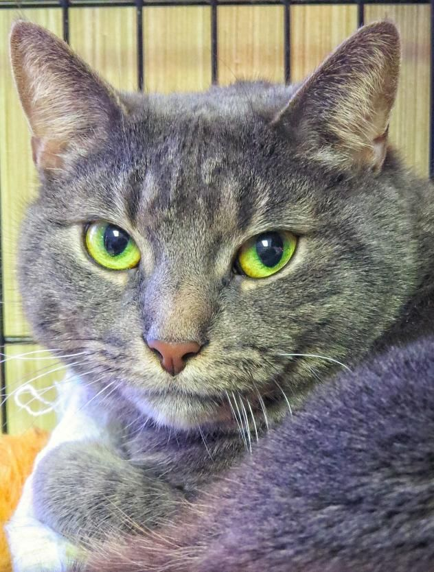 Adopt 5461 Cleo on Animal shelter, West babylon, Animals