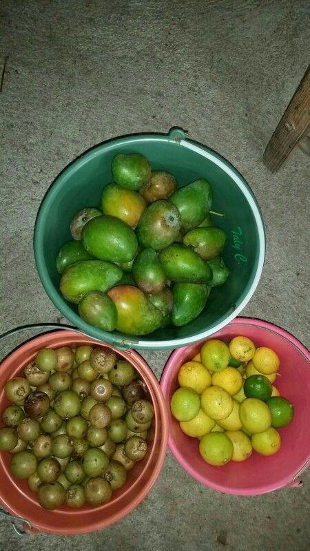 Mangos, coyoles y limón agrio. Quien quiere? Nocupetaro, Mich.