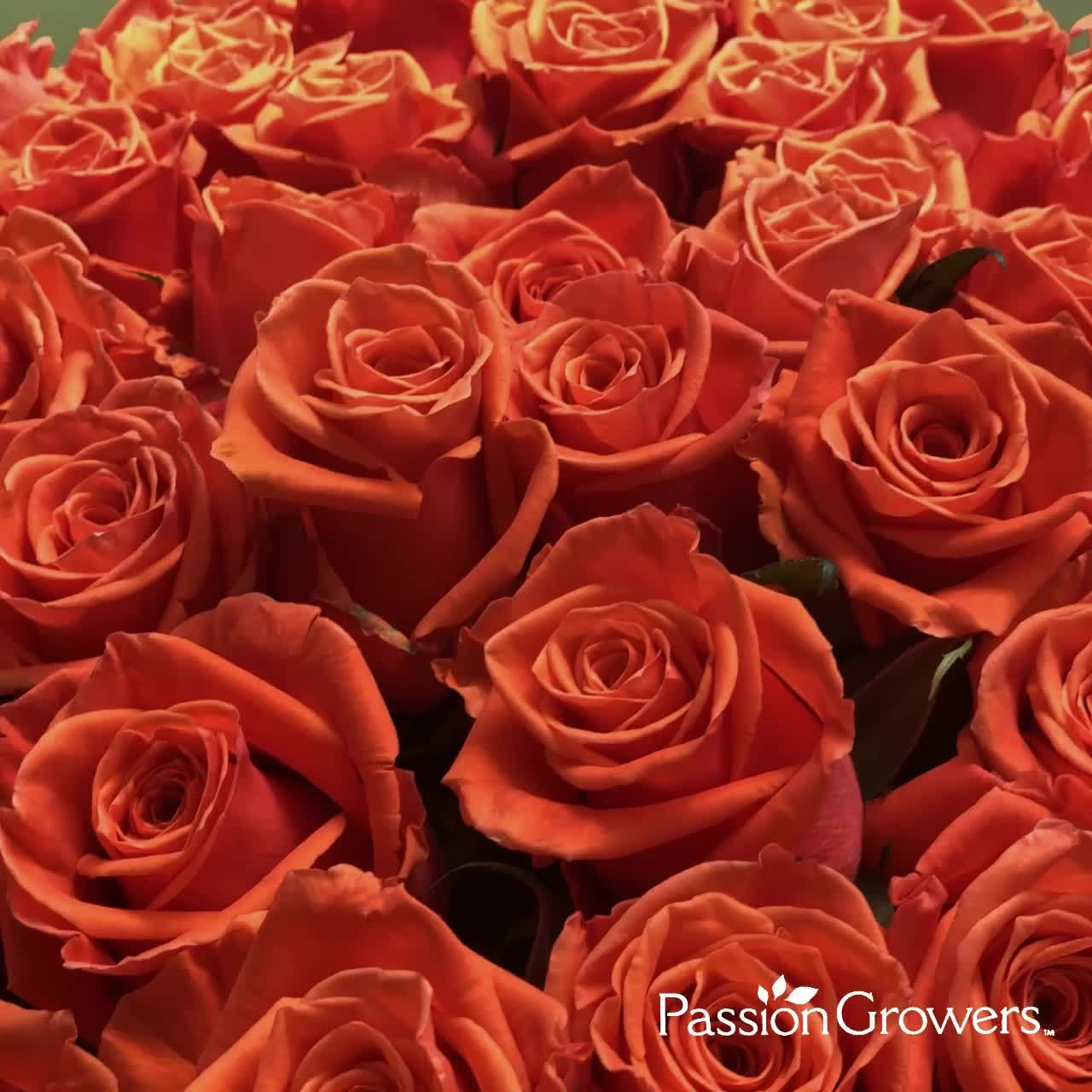 Roses Roses Everywhere! Do you have yours?  . . . . #giveroses #valentinesdayroses #valentinesdayflowers #rose #rosequote #passionroses #passiongrowers #flowerstagram #flowers #roses #flower