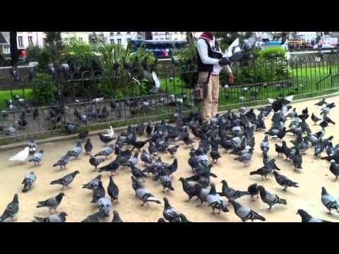 Souvenirs, Collage, and Other Videos! | Life, Thoughts, and Wanderlust #travel #notredame #cathedral #pigeons #cute #feedthebirds  jklovetokyo.blogspot.com