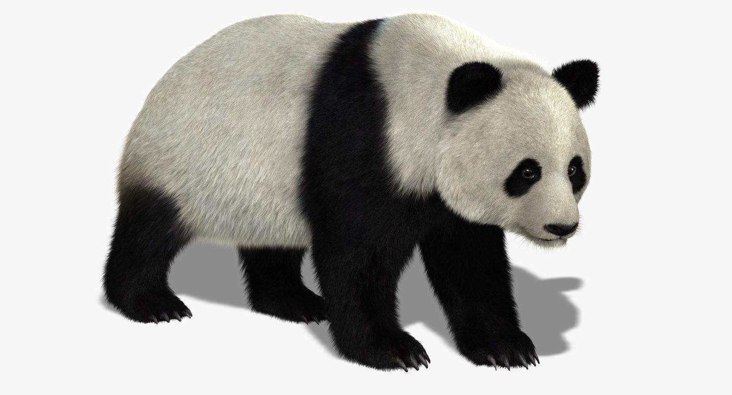 giant panda bear fur obj