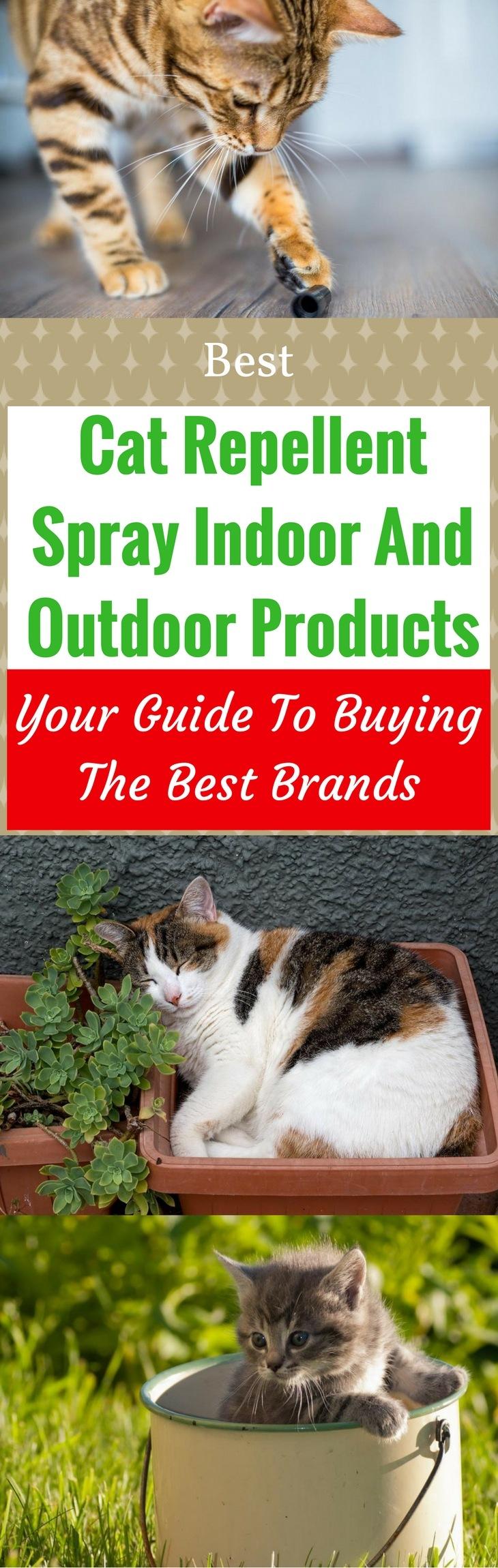 Best Cat Repellent Spray Indoor and Outdoor 2018 Buyer's