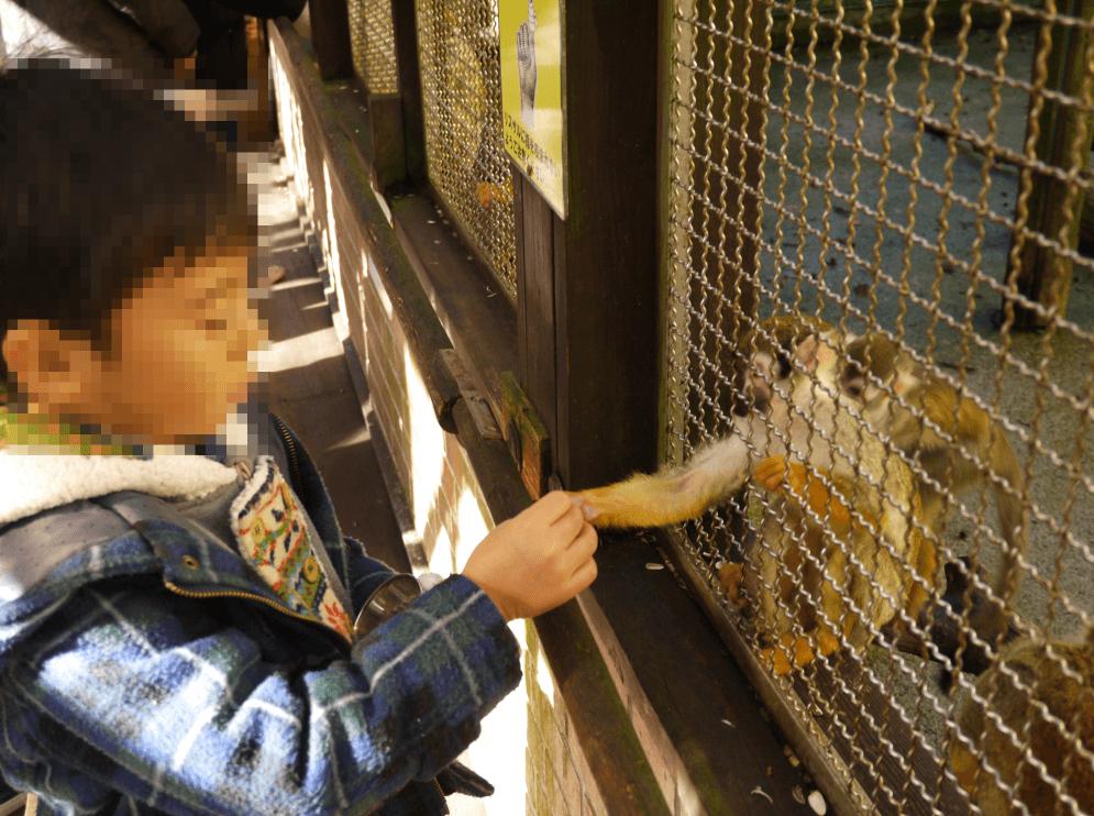 富士サファリパークのリスザル餌やり体験 ホテルレジーナ河口湖宿泊 サファリパーク 富士サファリパーク リスザル