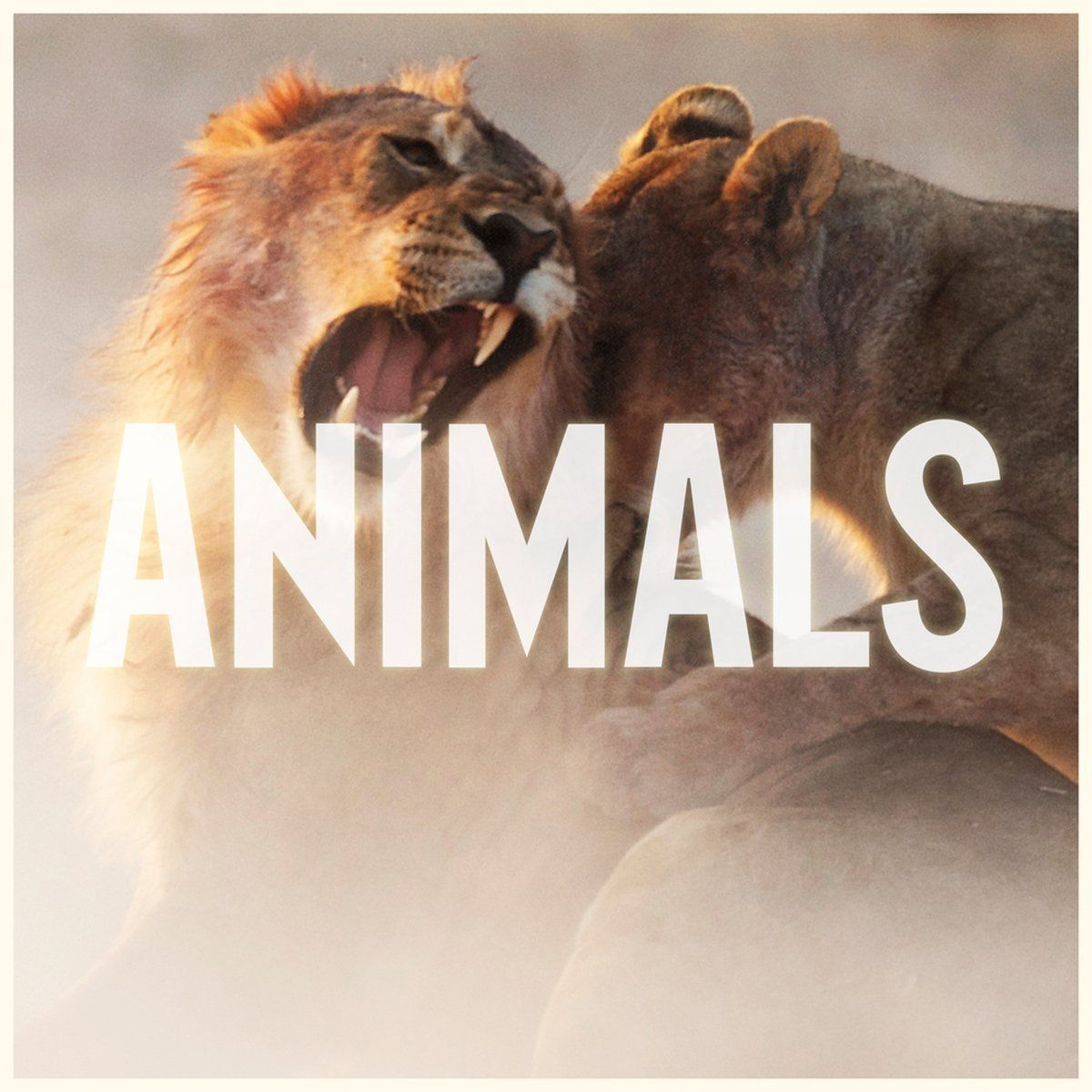 Maroon 5 Animals NEW SONG! Maroon 5 animals, Animals
