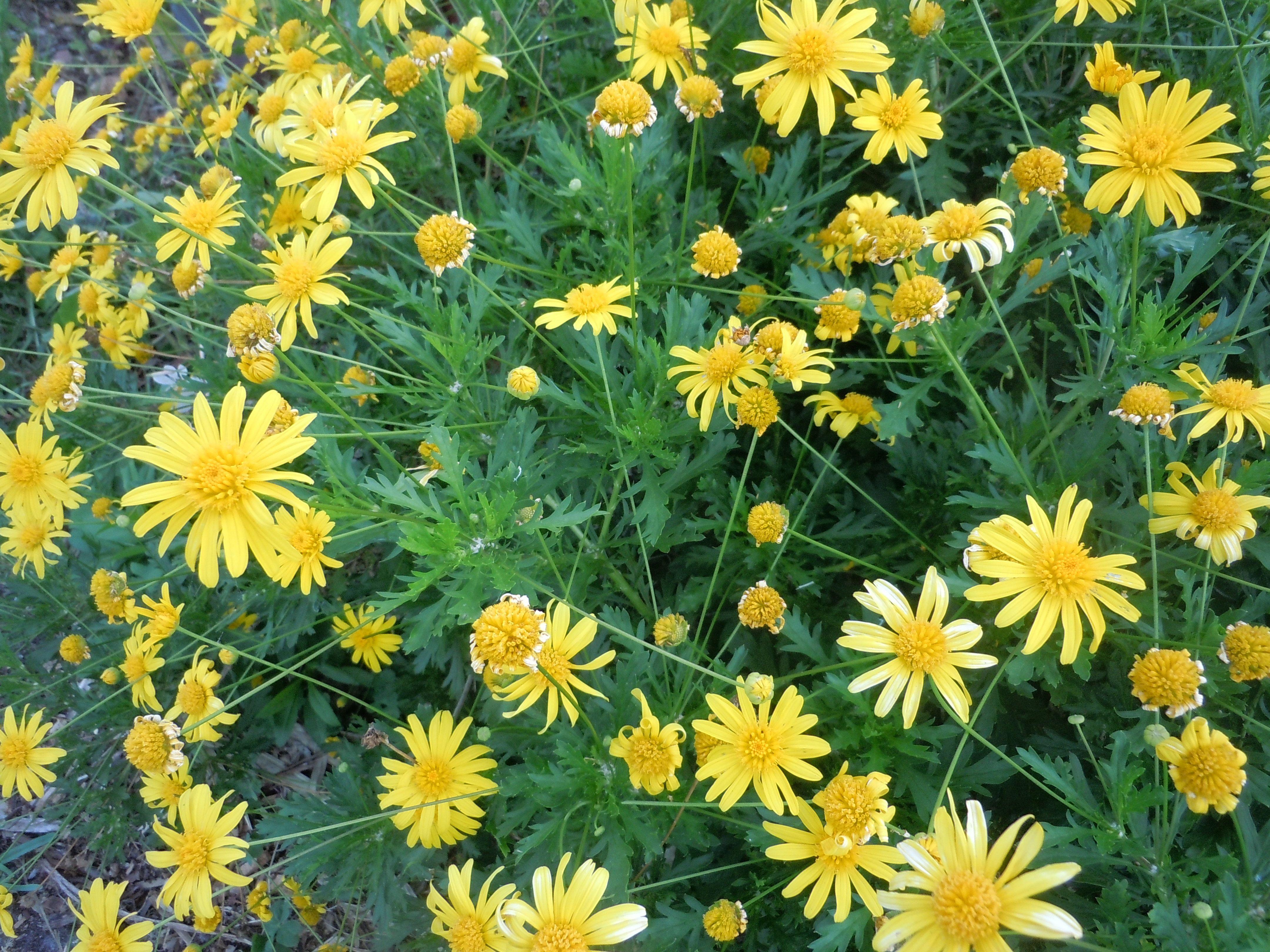 Bright yellow flowers along park avenue winter park
