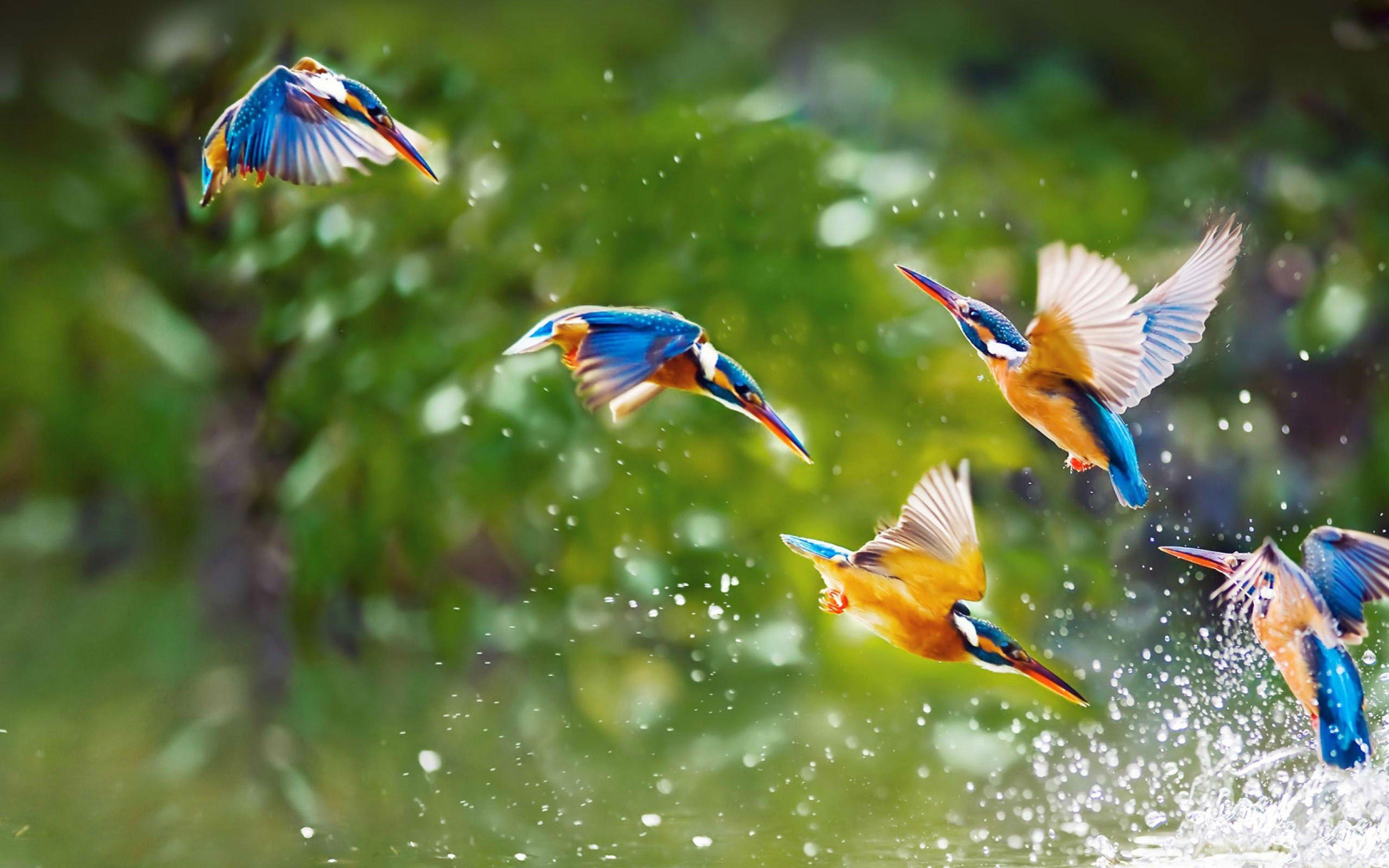 #8119, Free desktop bird image