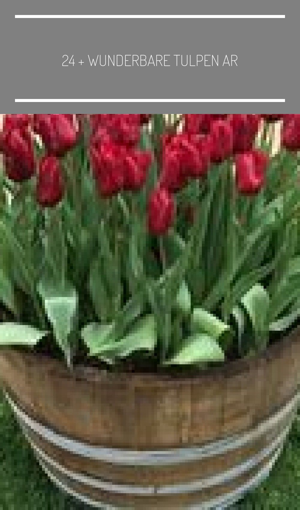 24 + wunderbare Tulpen Arrangement Tipps für Ihre Home Garden Ideen,  #Arrangement #beautifulhomegarden #besthomegarden #dreamhomegarden #easyhomegarden #für #Garden #home #homegardenaesthetic #homegardenapartment #homegardenarchitecture #homegardenbackyard #homegardenbalcony #homegardenbar #homegardenbeginner #homegardenboxes #homegardendecoration #homegardendesign #homegardendiy #... #propagating succulents container 24 + wunderbare Tulpen Arrangement Tipps für Ihre Home Garden Ideen