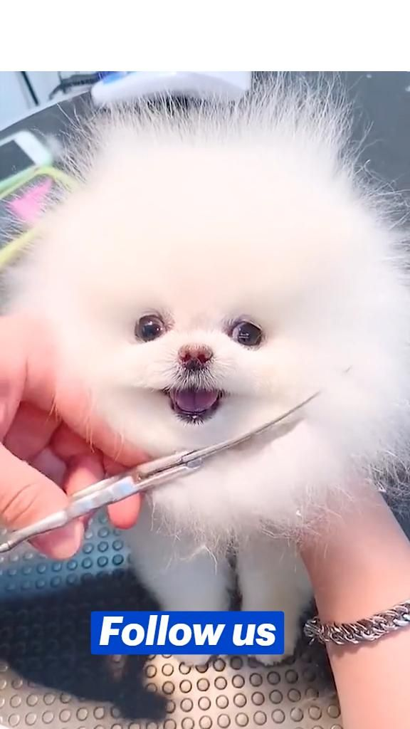 Who want this cute dog ?
