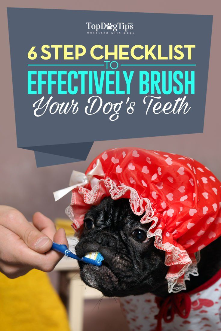 dog health and dental insurance