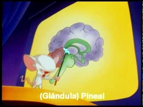 Pinky y Cerebro - Con explicación de cada parte: El Cerebro (Brainstem) Subtitulado al Español