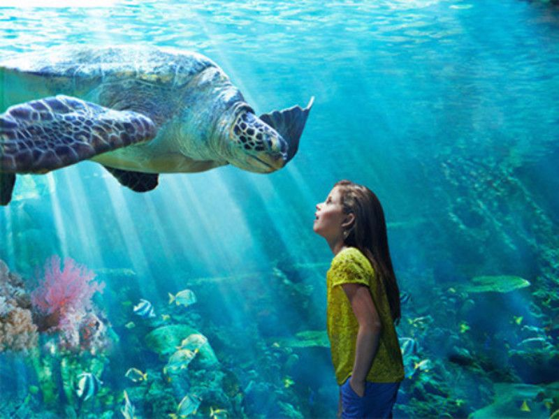 http://traveleze.strikingly.com/blog/3-hot-reasons-to-explore-orlando-with-your-kids-now