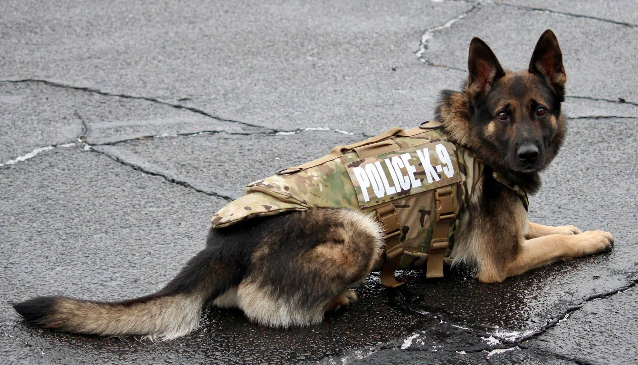 Monroe Police Dog Gets Body Armor
