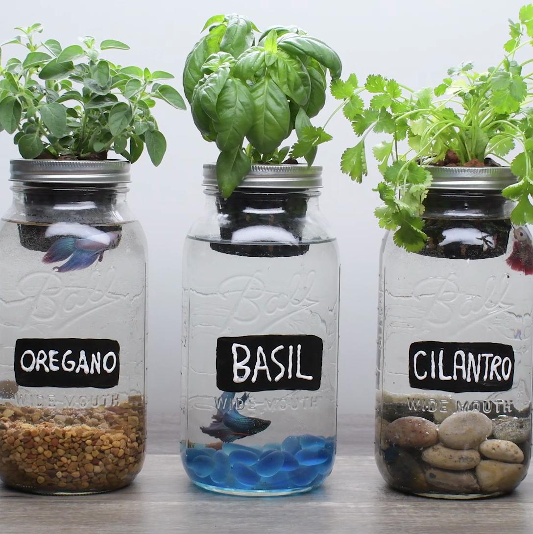 Resultado de imagen para mason jar aquaponics Mason jar
