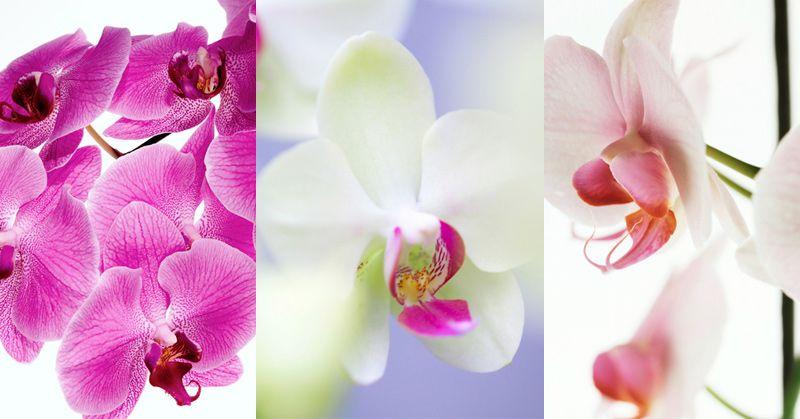 Orchidee: come coltivarle, curarle e farle rifiorire ...
