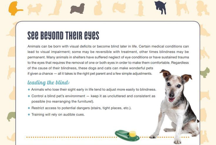 Pin on Dog Adoption Tips