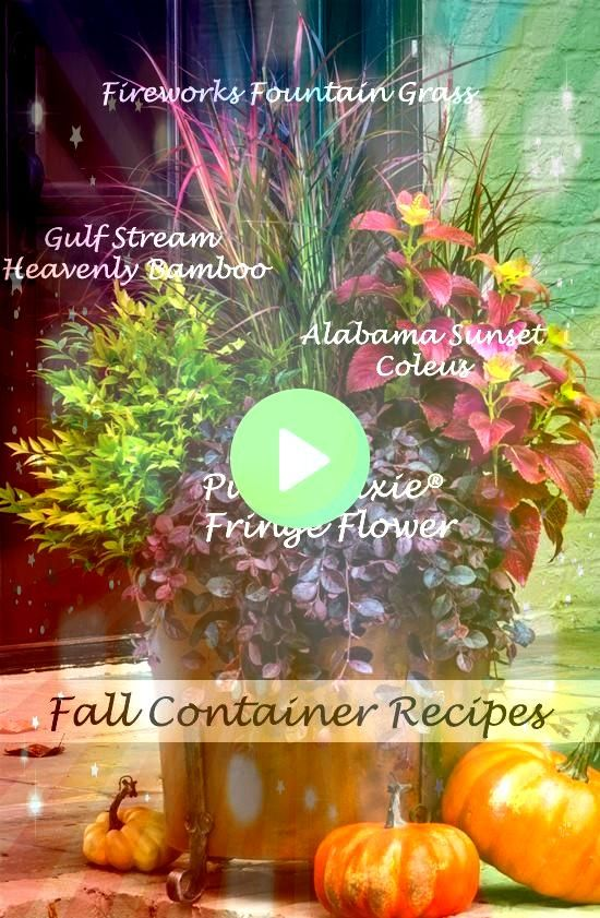fall by redoing pots using perennials and shrubs as the backbone dolledup with seasonal annuals Come the snowy or rainy season when the seasonal color is done but contain...