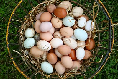 Image result for image of farm-fresh eggs
