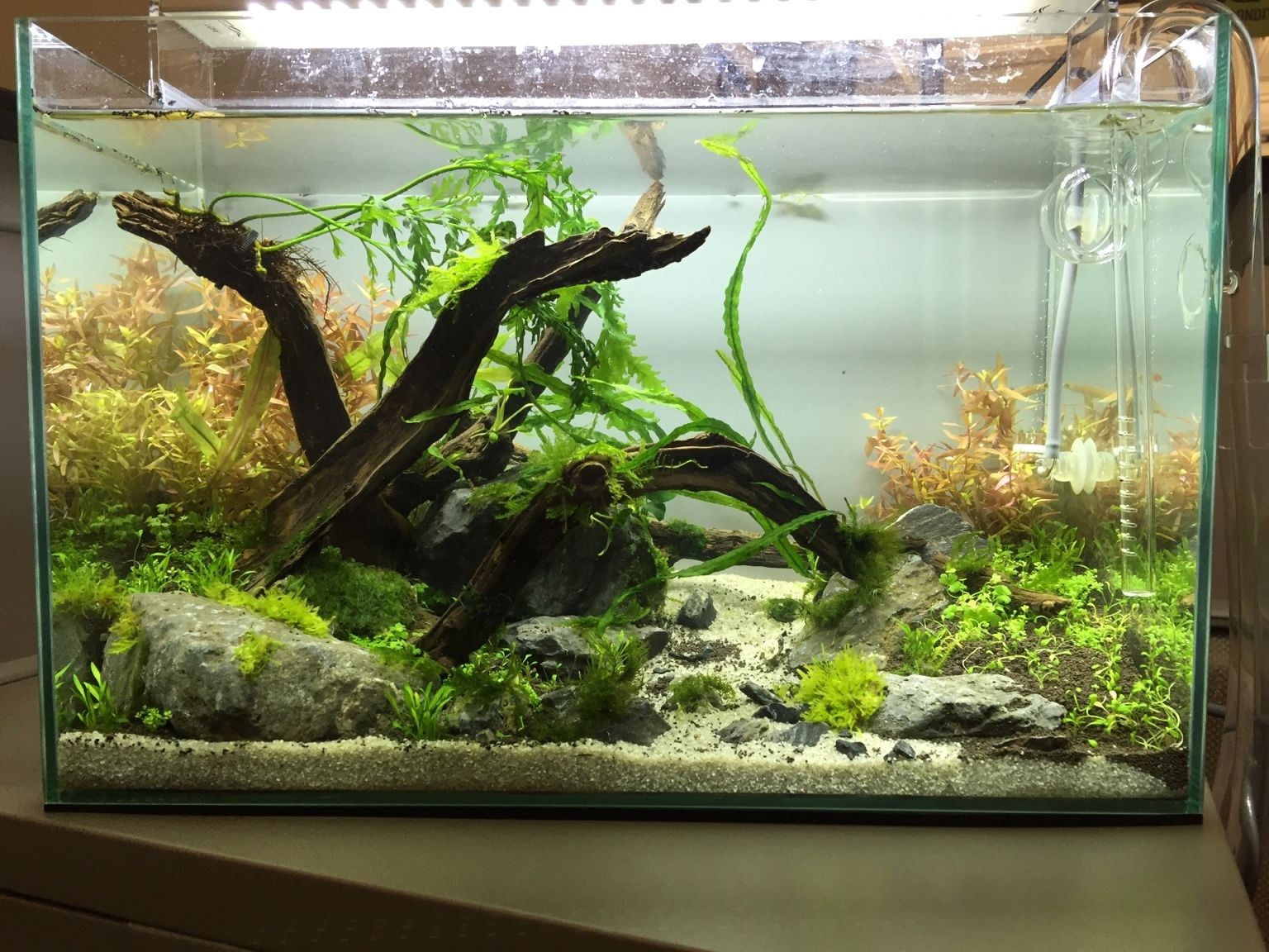 Do Aqua Cube Glass Office Scape (Updated   The Planted Tank Forum