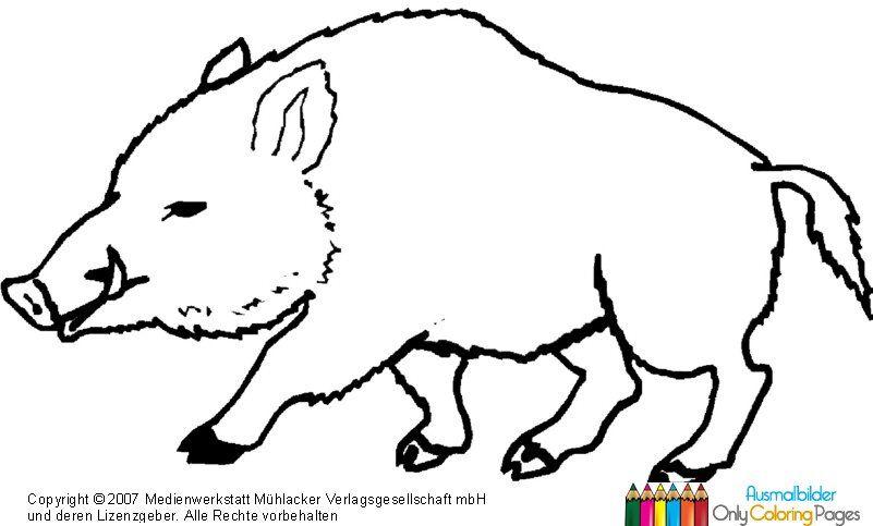 Wildschwein Zum Ausmalen Tiere Im Hinterbüsch Wildschwein